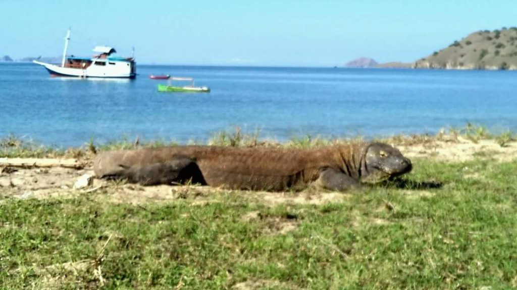 3 D / 2 N  KOMODO ADVENTURE